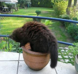 Otis, le chat poté! dans MES ANIMAUX DE COMPAGNIE p1150711