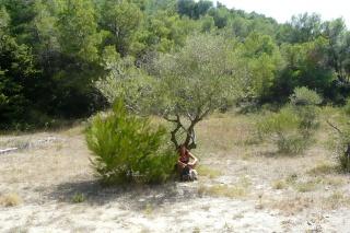 Le Pech et l'olivier. dans CONTE p1170110