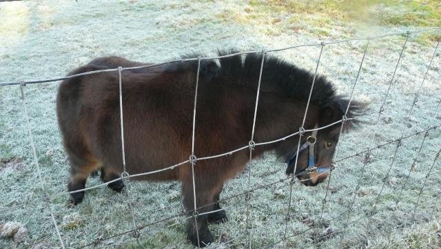 Mon voisin le poney dans POESIES, TEXTES p1180311