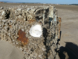 Accrochée à un rocher dans MOMENT DE VIE p1190210