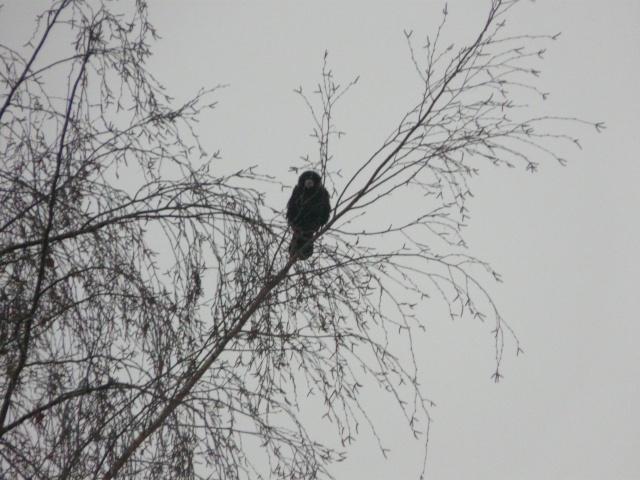 La pluie en hiver dans LES 4 SAISONS p1210810