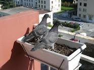 Les confidents dans MOMENT DE VIE pigeon10