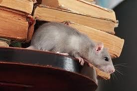 Léon, le rat de bibliothèque dans CONTE rat10