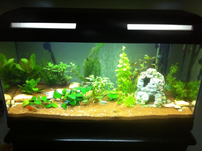 Vend aquarium 90l complet avec pompe externe jbl 701 e for Pompe externe aquarium