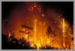 La forêt d'incendie