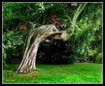 L'arbre de repos