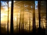 La - forêt - des - soupçons