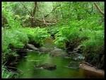 Rivière de la tortue