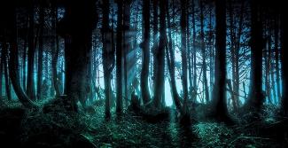 Forêt aux arbres morts