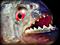 Présentation de vos piranhas