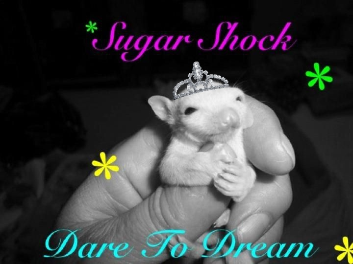Sugar Shock Gliders & Boutique