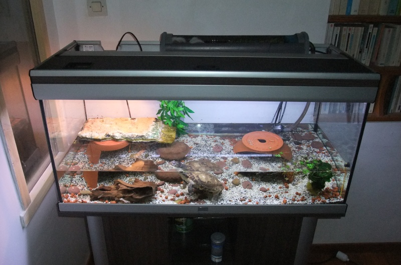 Aquarium tortue for Aquarium a acheter