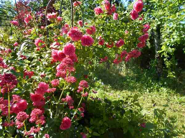 rosari14.jpg