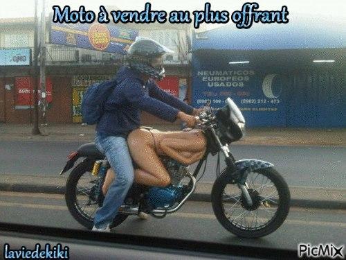 Je veux customiser un xr 1200 qu en pensez vous - Image drole de motard ...