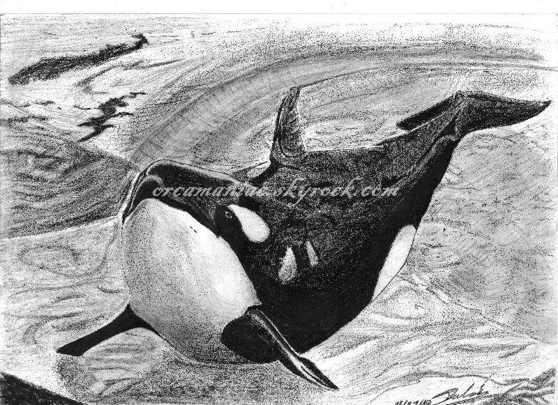 Dessin dessin d 39 orque page 3 - Dessin d orque ...