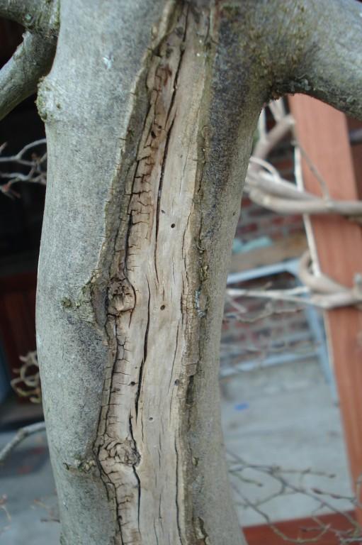 Traitement du bois mort sur charme for Carbonyle traitement du bois
