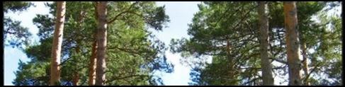 Allée des pins