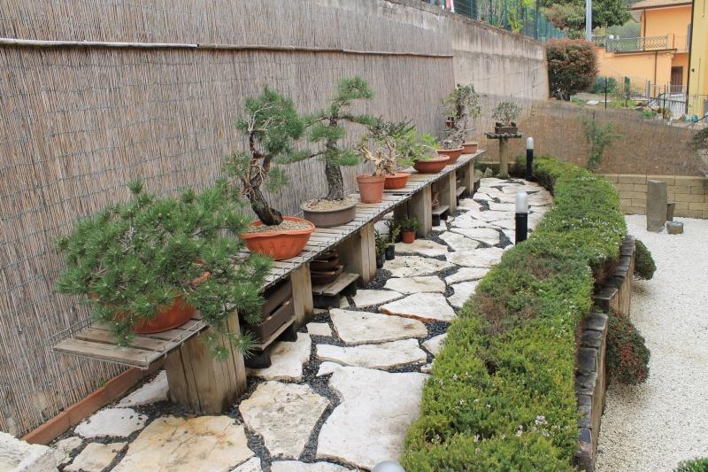 Dove coltiviamo i nostri bonsai pagina 11 for Dove comprare bonsai
