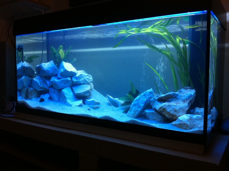 Bac tanganyika for Decoration pour aquarium d eau douce