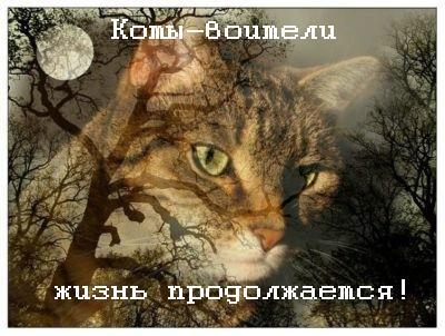 http://i45.servimg.com/u/f45/17/45/34/55/x_27a510.jpg