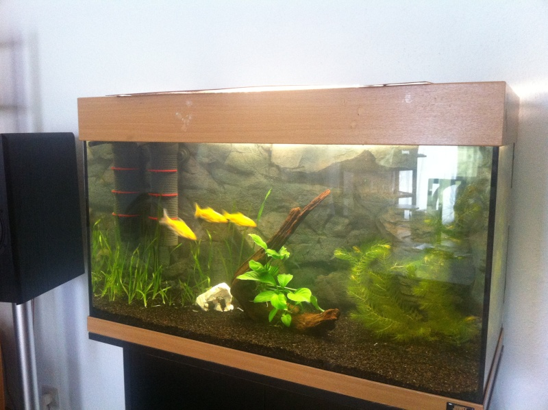 120l poisson rouge for Aquarium poisson rouge avec pompe