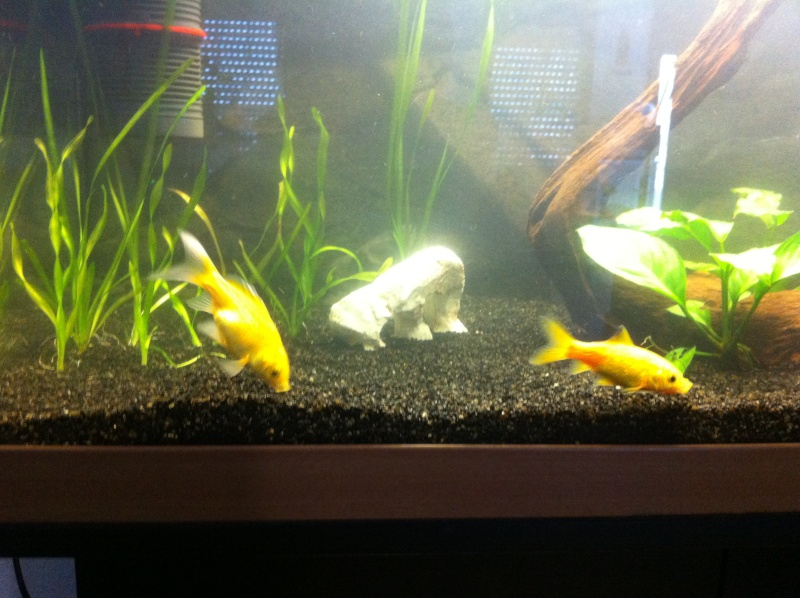 120l poisson rouge for Ou placer aquarium poisson rouge