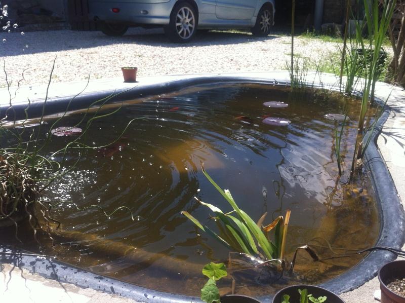 bassin de jardin 1000 litres