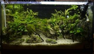 planta14.jpg